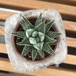 img-turcoMTL4_marlene-b-designer-artiste-montreal_pot-beton-cactus